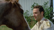 Horse and rick2