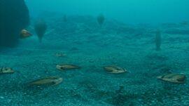 Trilobite gang