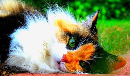 EmberClan | Warrior Cat Clans Wiki | Fandom powered by Wikia