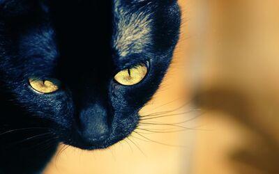 Death-Cat