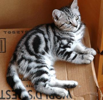 Iceflower   Warrior Cats Roleplay Wiki   FANDOM powered by ...