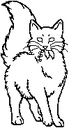 Medicine Cat.long