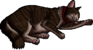 Jingo.kittypet
