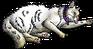 Pixie.kittypet