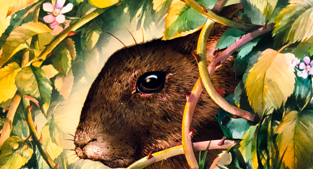 File:First Rabbit.png