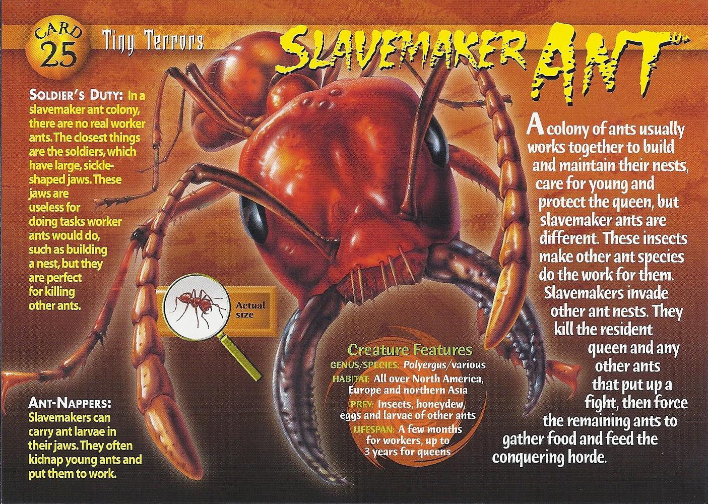 slave maker wiki