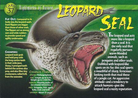 leopard seal wierd nwild creatures wiki fandom