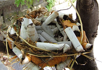 File:Cigarette Butt Bird Nest.jpg