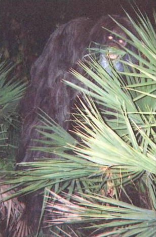 File:Skunk-ape.png