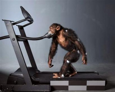 ChimpTreadmill