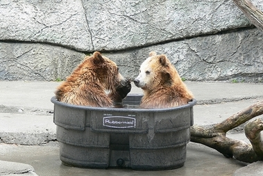File:BearsInATub.jpg