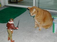 Soldier Giant cat