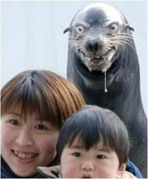 File:Crazysealion.jpg