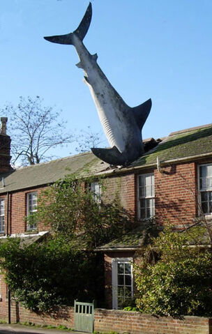 File:Shark big.jpg