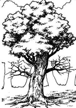 Gra Wyobrazni tree monster