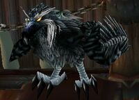 Daggercap Hawk