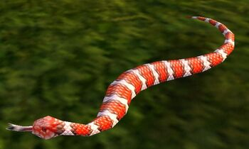 Image of Coral Snake