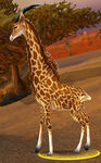 Barrens Giraffe