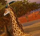 Barrens Giraffe