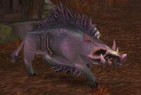 Plagued Swine