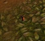 BeetleWP