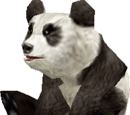 Panda Collar