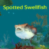 Spotted Swellfish