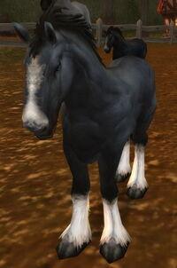Havenshire Colt