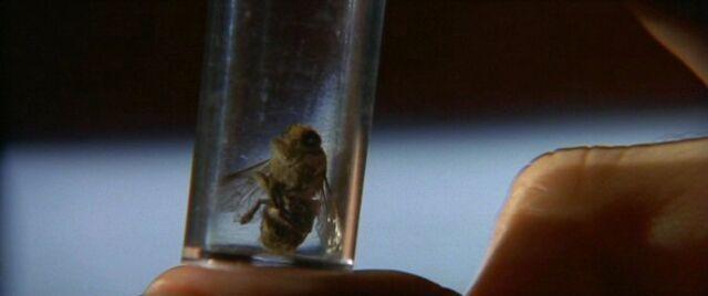 File:Bee as FBI evidence.jpg
