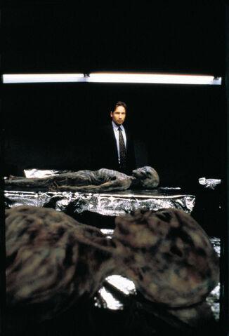 File:Mulder Pentagon Alien bodies Redux.jpg