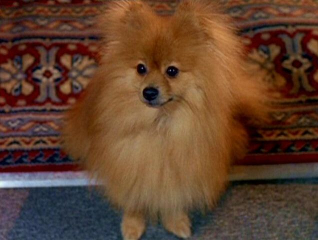 File:Queequeg.jpg