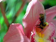 Bee (1995)