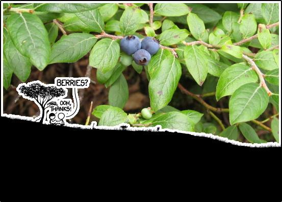 Xkcd1378-berries