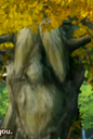 Professor Philospher Tree