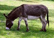 250px-Donkey 1 arp 750px