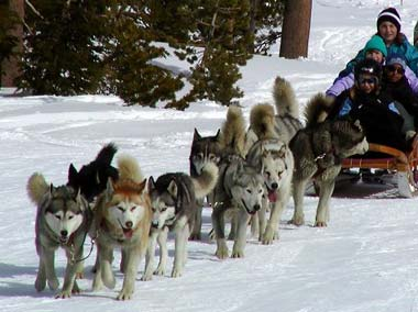 File:Dog sled 380.jpg
