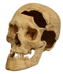 Skull damaged by a sword