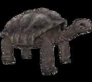 Galapagostortoise