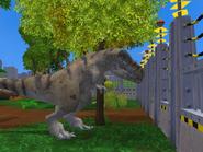 Male Tyrannosaurus