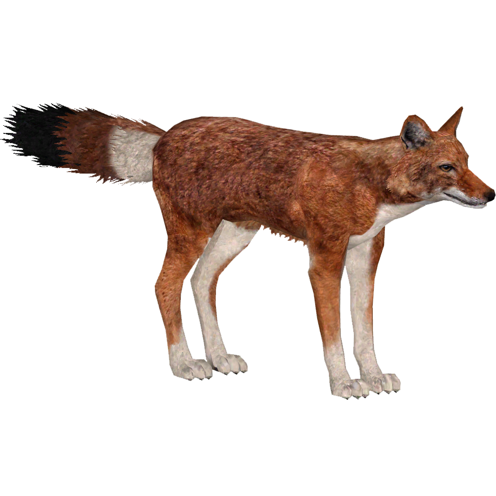 Ethiopian Best Fence Designs : Ethiopian Wolf (aquila)  ZT2 Download Library Wiki  Fandom powered ...