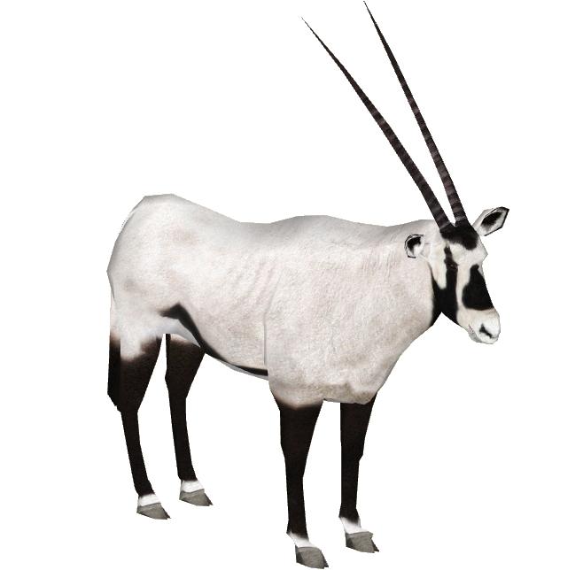 Arabian Oryx Slice Zt2 Download Library Wiki Fandom