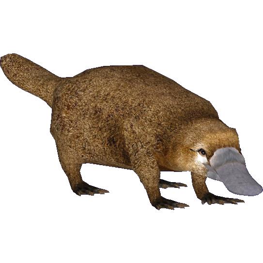 Platypus Longisquama ZT2 Download Library Wiki