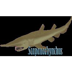 Goblin Shark (Mitsukurina Owstoni or Scapanorhynchus Owstoni ...