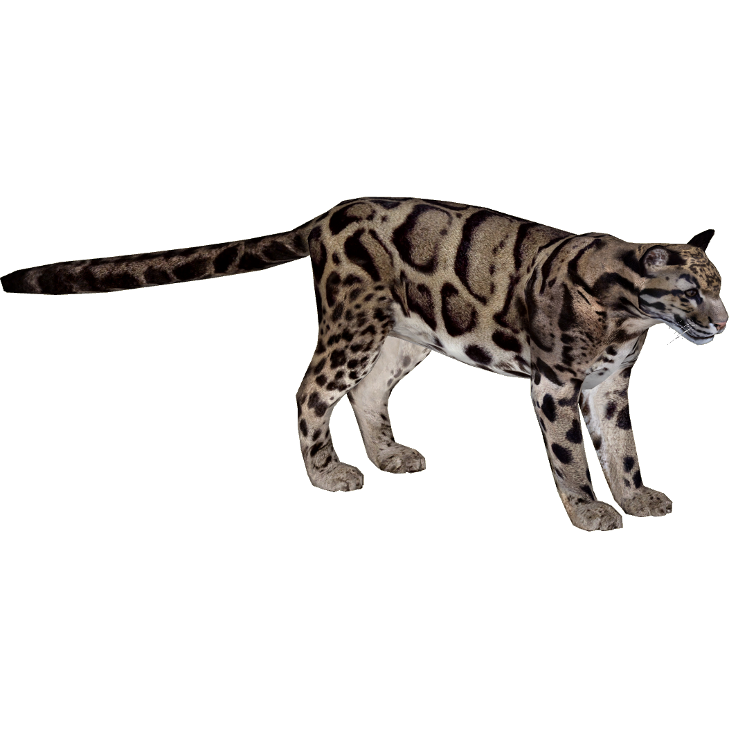 Clouded Leopard Mibound Zt2 Download Library Wiki