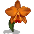 Orchids Orange-icon