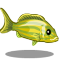 ColorfulFish Grunt Fish-icon