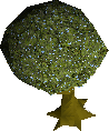 Old dramen tree