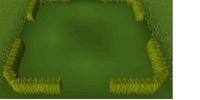 Small box hedge