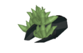 Sprouting-roots.png
