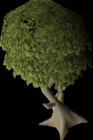 File:Mature juniper tree.png